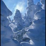 Snow Goblins
